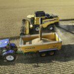 Cosechadora CX7/8 depositando trigo en la tolva