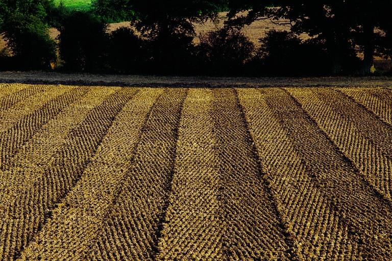 La importancia de conocer la salud del suelo